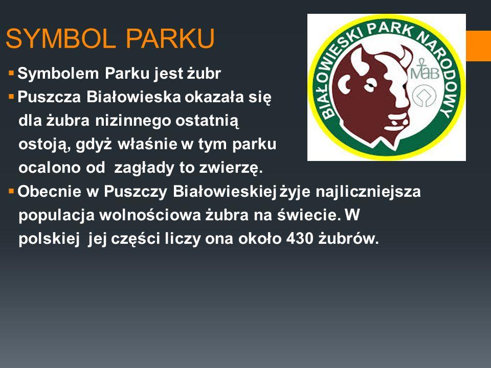 SYMBOL PARKU Symbolem Parku jest żubr Puszcza Białowieska okazała się