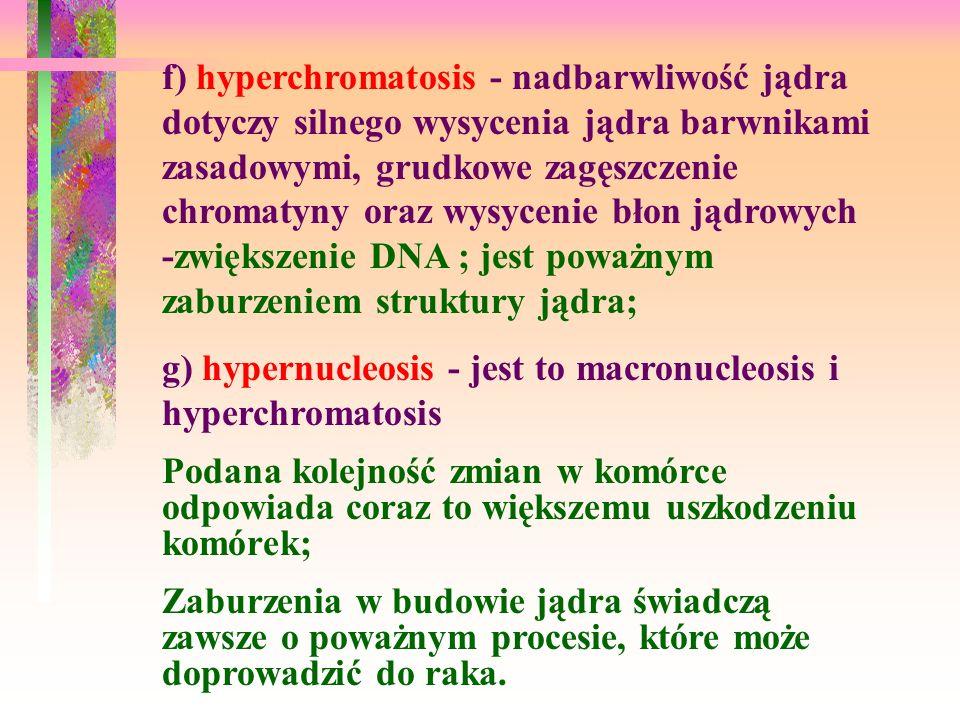 f) hyperchromatosis - nadbarwliwość jądra dotyczy silnego wysycenia jądra barwnikami zasadowymi, grudkowe zagęszczenie chromatyny oraz wysycenie błon jądrowych -zwiększenie DNA ; jest poważnym zaburzeniem struktury jądra;