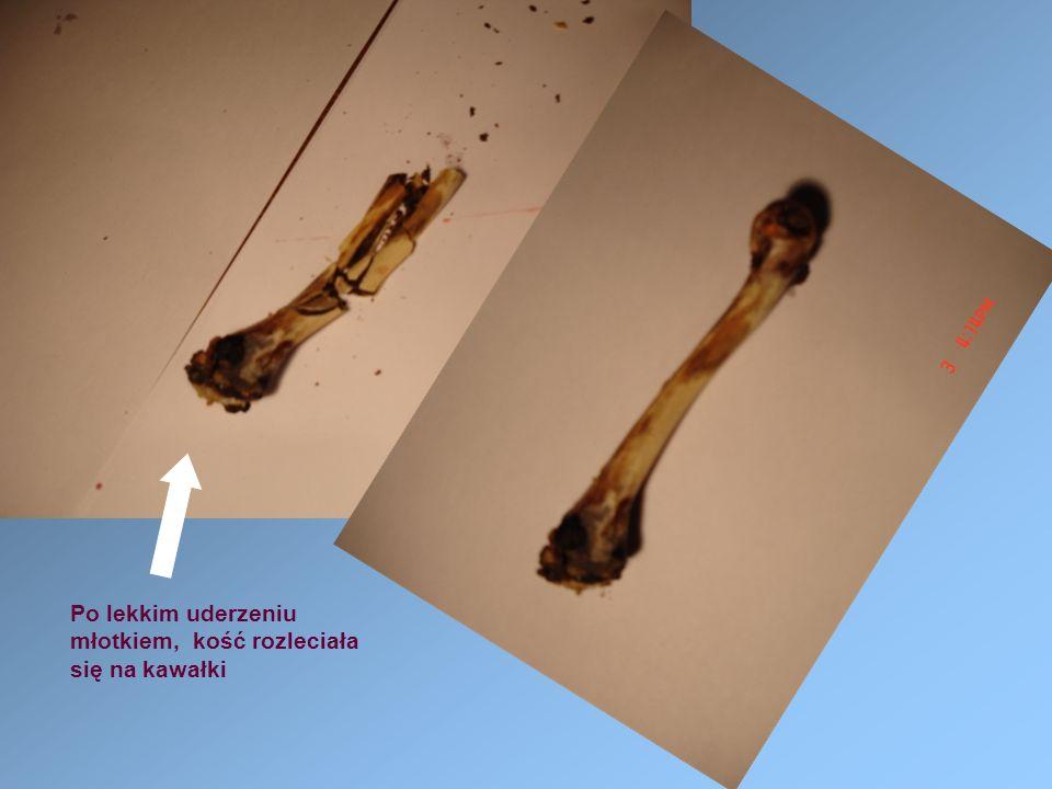Po lekkim uderzeniu młotkiem, kość rozleciała się na kawałki