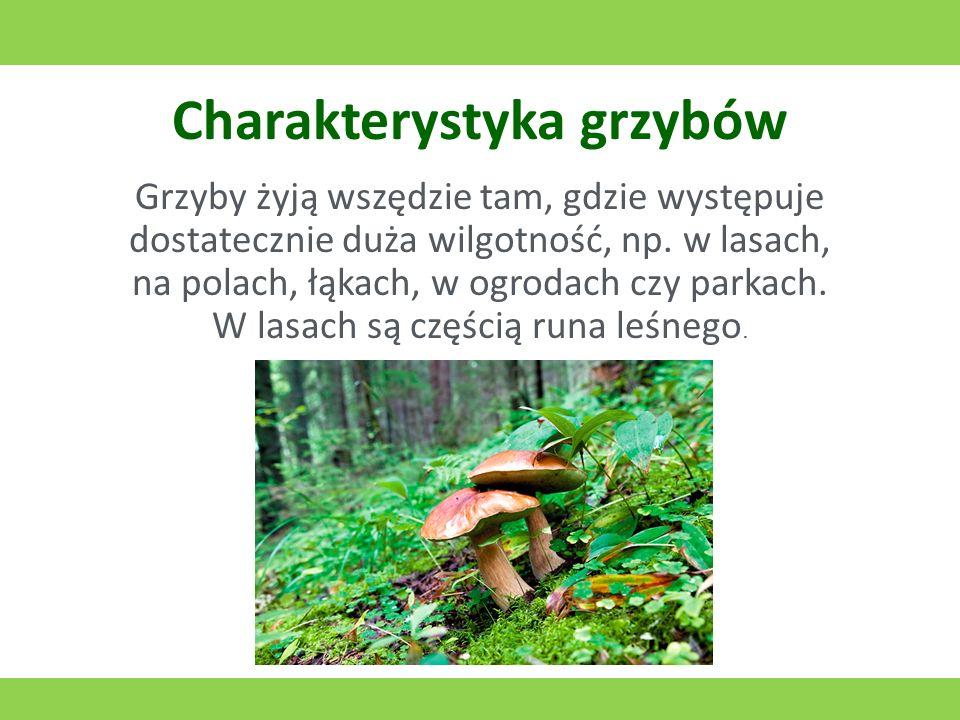 Charakterystyka grzybów