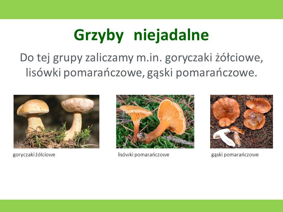Grzyby niejadalne Do tej grupy zaliczamy m.in. goryczaki żółciowe, lisówki pomarańczowe, gąski pomarańczowe.