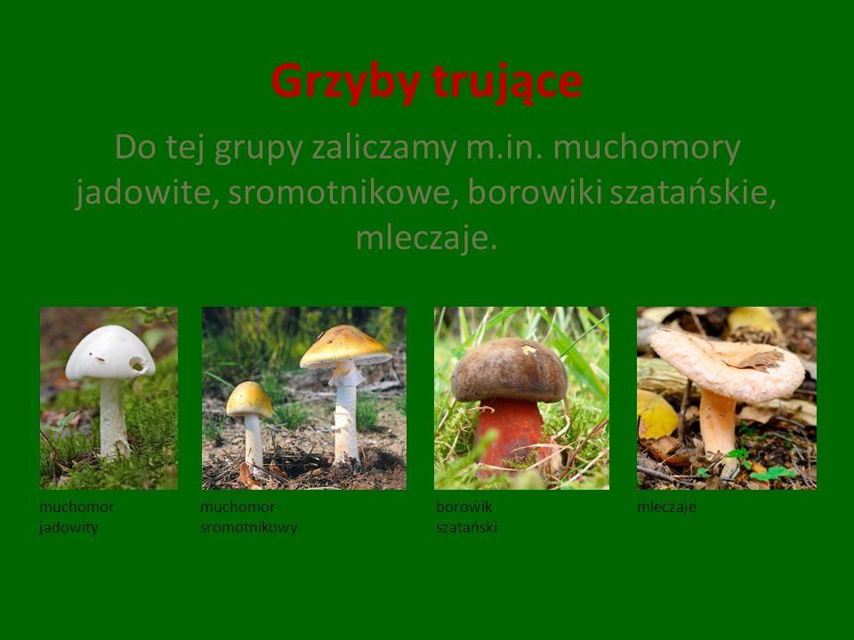 Grzyby trujące Do tej grupy zaliczamy m.in. muchomory jadowite, sromotnikowe, borowiki szatańskie, mleczaje.