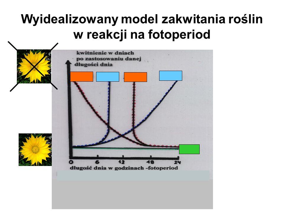 Wyidealizowany model zakwitania roślin w reakcji na fotoperiod