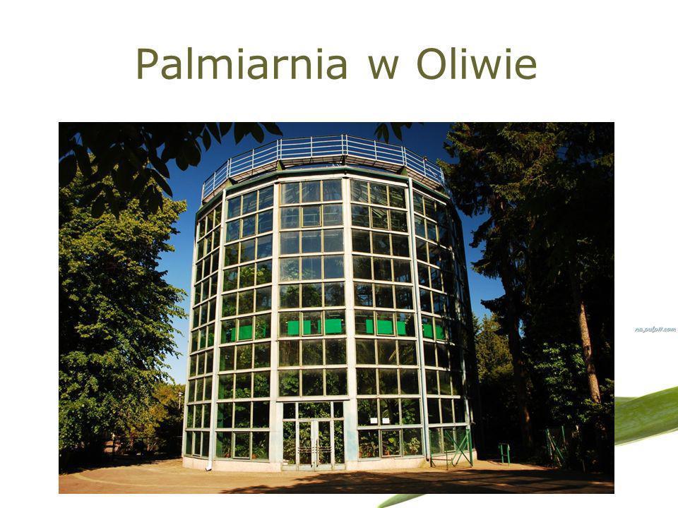 Palmiarnia w Oliwie