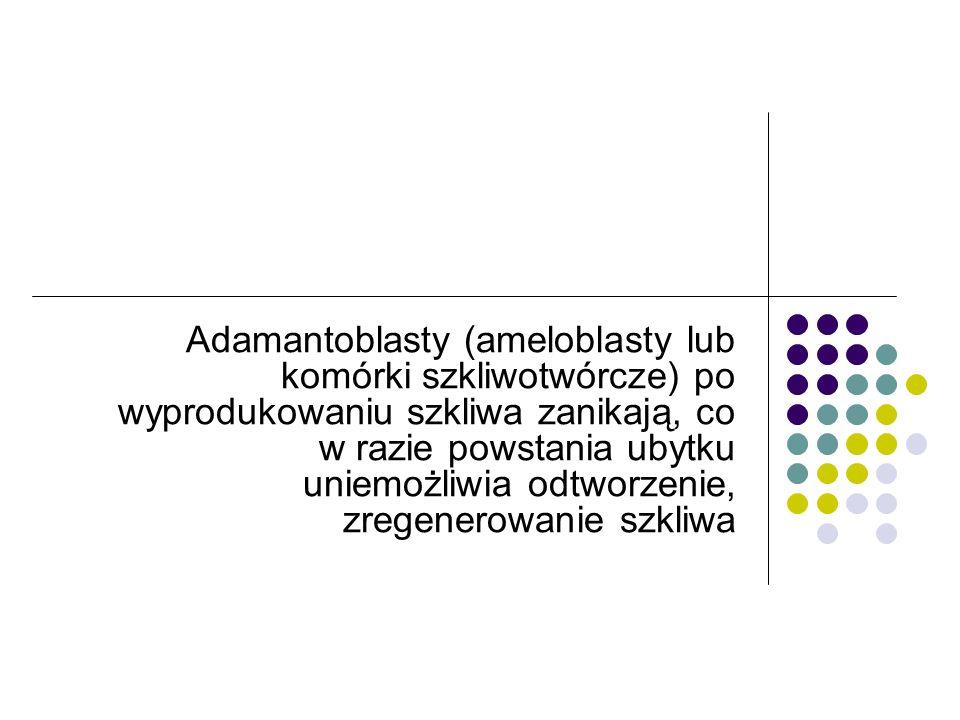 Adamantoblasty (ameloblasty lub komórki szkliwotwórcze) po wyprodukowaniu szkliwa zanikają, co w razie powstania ubytku uniemożliwia odtworzenie, zregenerowanie szkliwa