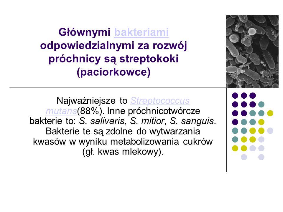 Głównymi bakteriami odpowiedzialnymi za rozwój próchnicy są streptokoki (paciorkowce)