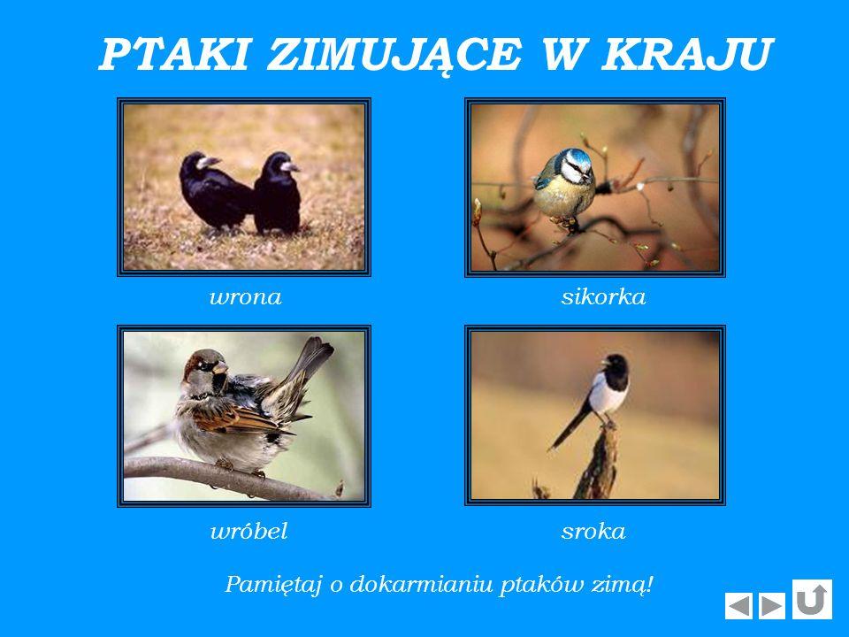 Pamiętaj o dokarmianiu ptaków zimą!
