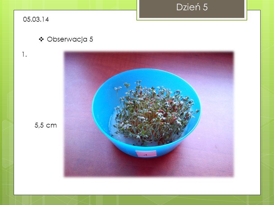 Dzień 5 05.03.14 Obserwacja 5 1. 5,5 cm