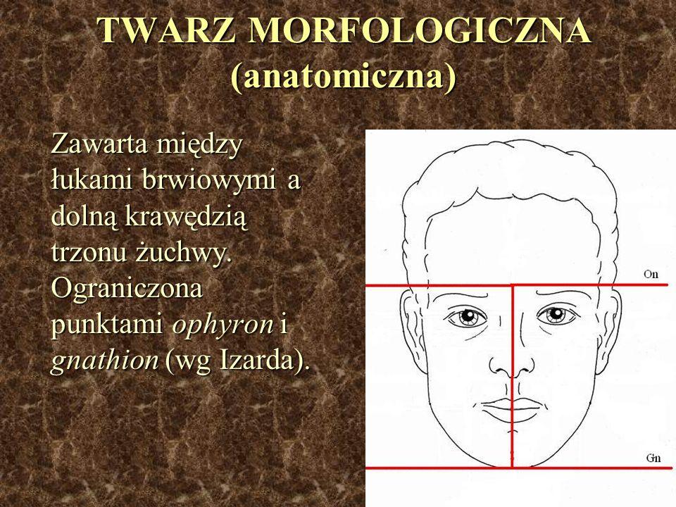 TWARZ MORFOLOGICZNA (anatomiczna)
