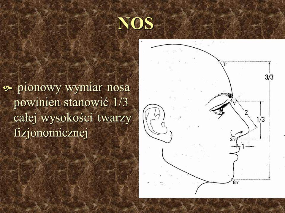 NOS pionowy wymiar nosa powinien stanowić 1/3 całej wysokości twarzy fizjonomicznej