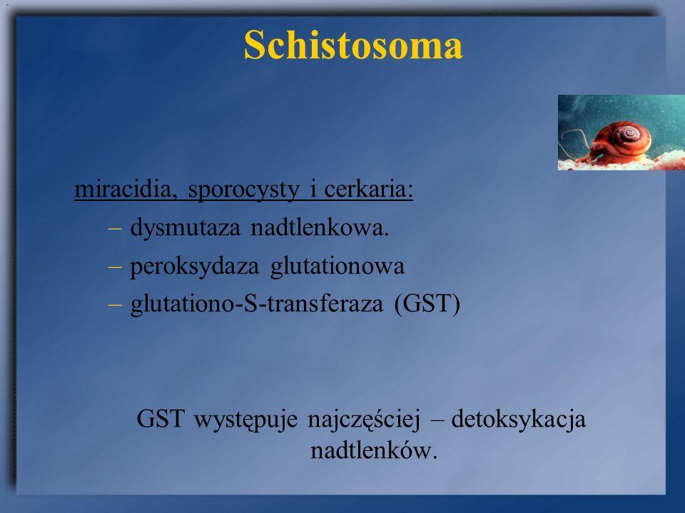 GST występuje najczęściej – detoksykacja nadtlenków.