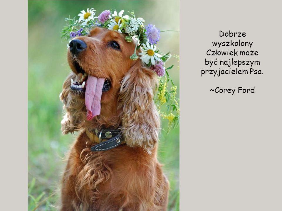 Dobrze wyszkolony Człowiek może być najlepszym przyjacielem Psa.