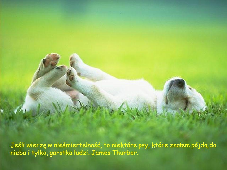 Jeśli wierzę w nieśmiertelność, to niektóre psy, które znałem pójdą do nieba i tylko, garstka ludzi.