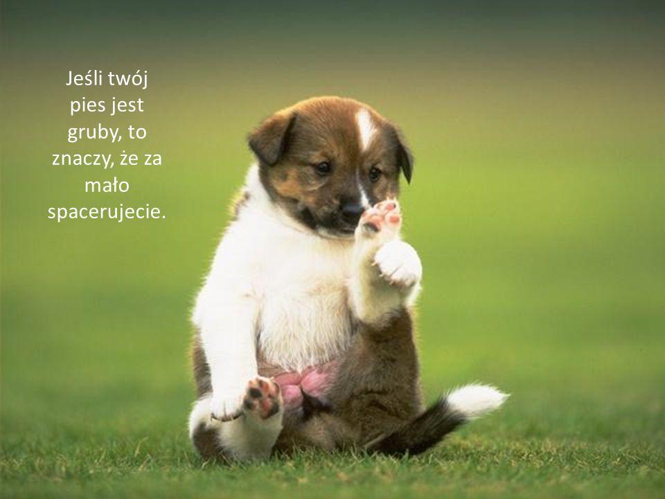 Jeśli twój pies jest gruby, to znaczy, że za mało spacerujecie.