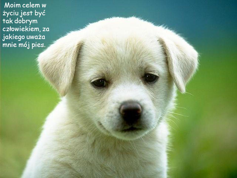 Moim celem w życiu jest być tak dobrym człowiekiem, za jakiego uważa mnie mój pies.