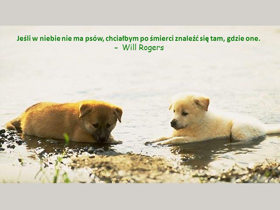 Jeśli w niebie nie ma psów, chciałbym po śmierci znaleźć się tam, gdzie one. - Will Rogers