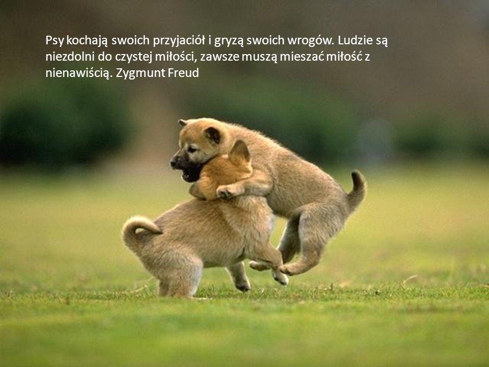 Psy kochają swoich przyjaciół i gryzą swoich wrogów