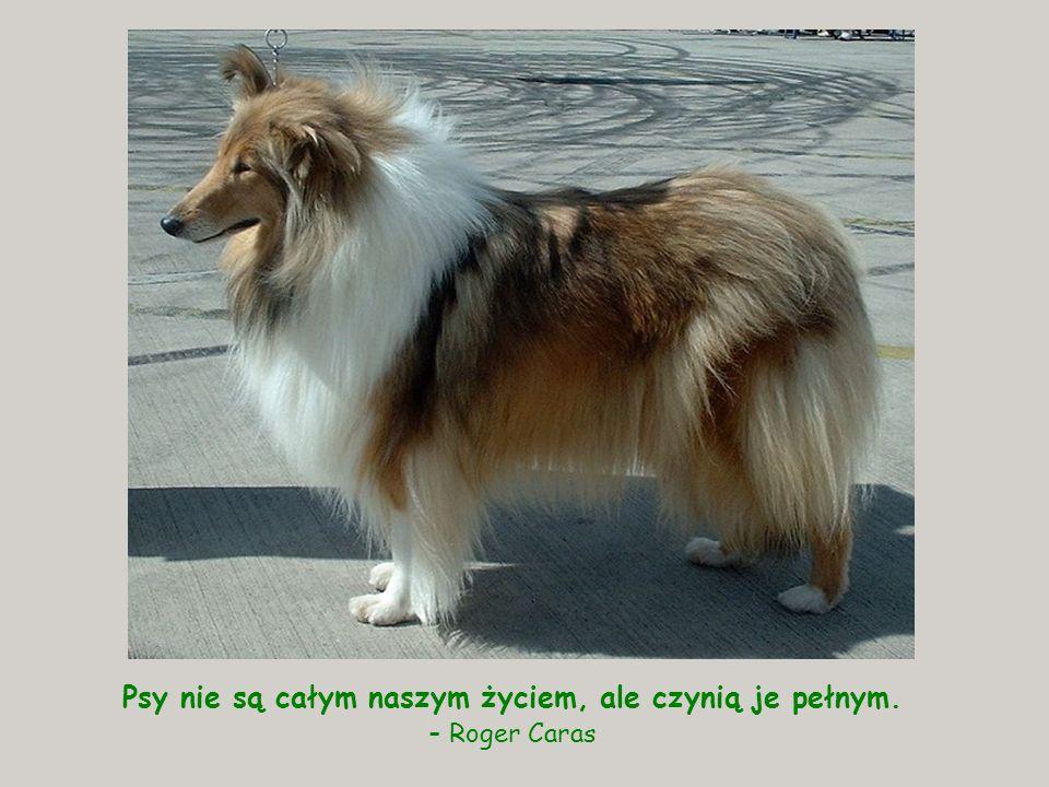 Psy nie są całym naszym życiem, ale czynią je pełnym.