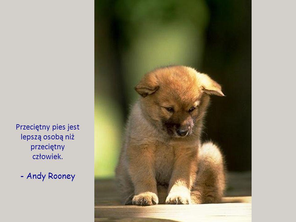 Przeciętny pies jest lepszą osobą niż przeciętny człowiek.