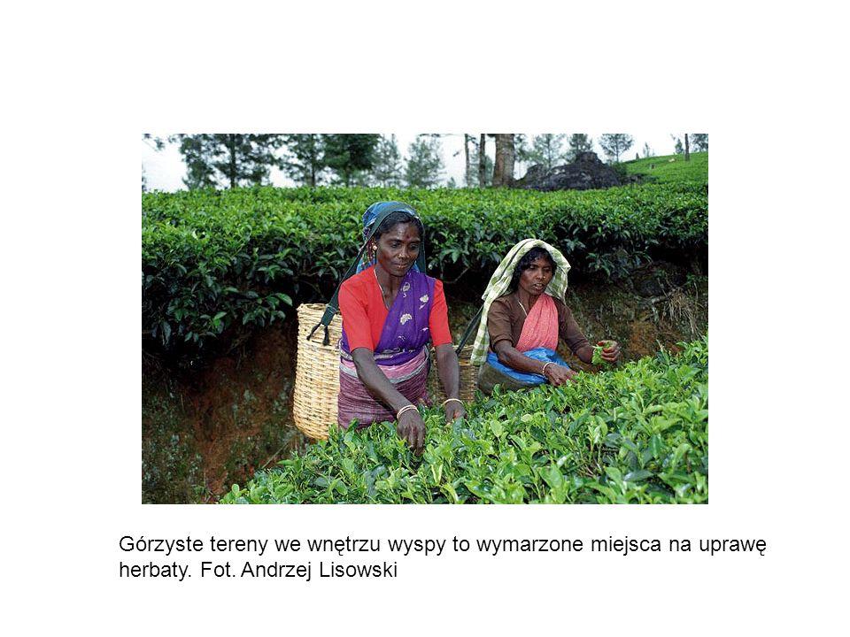 Górzyste tereny we wnętrzu wyspy to wymarzone miejsca na uprawę herbaty. Fot. Andrzej Lisowski