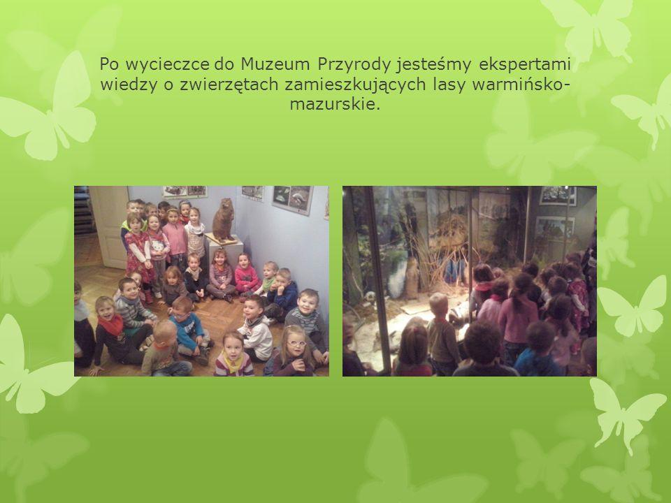 Po wycieczce do Muzeum Przyrody jesteśmy ekspertami wiedzy o zwierzętach zamieszkujących lasy warmińsko-mazurskie.