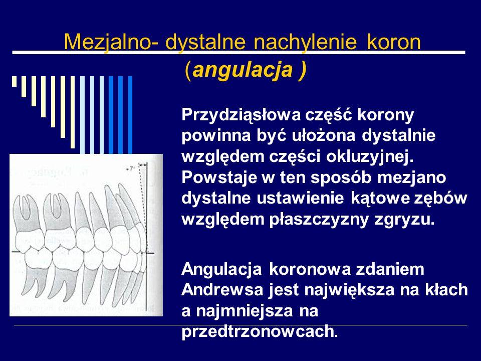 Mezjalno- dystalne nachylenie koron (angulacja )