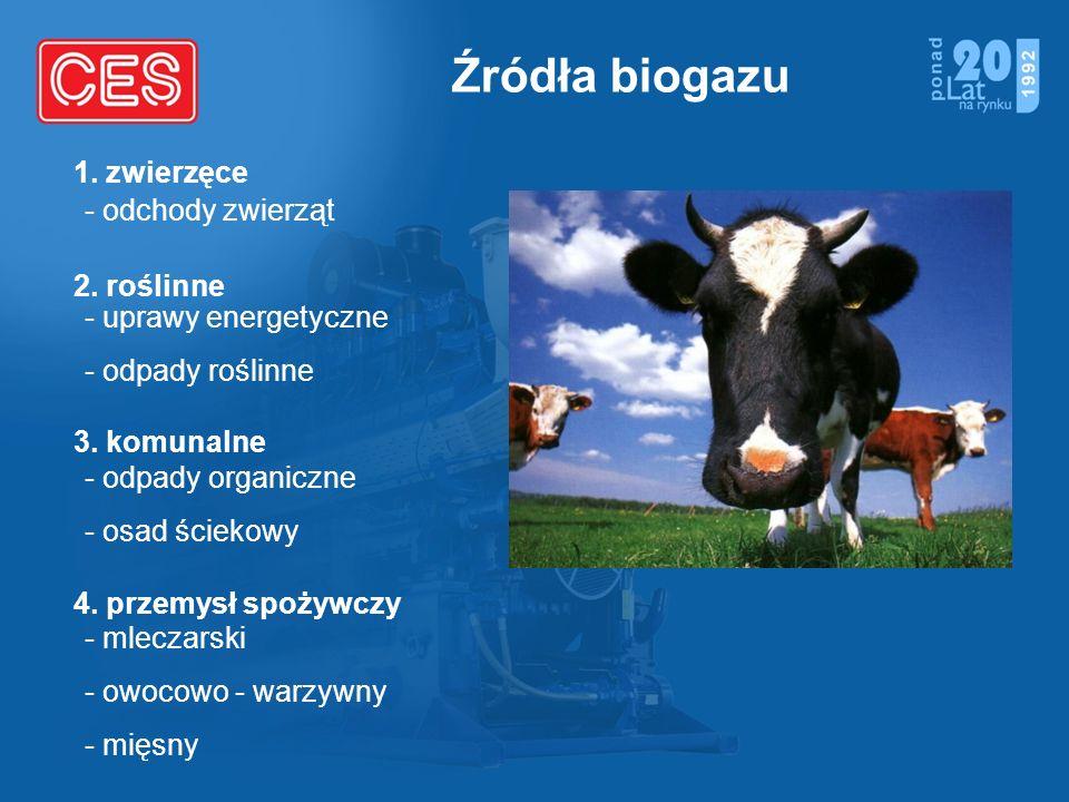 Źródła biogazu - odchody zwierząt - uprawy energetyczne