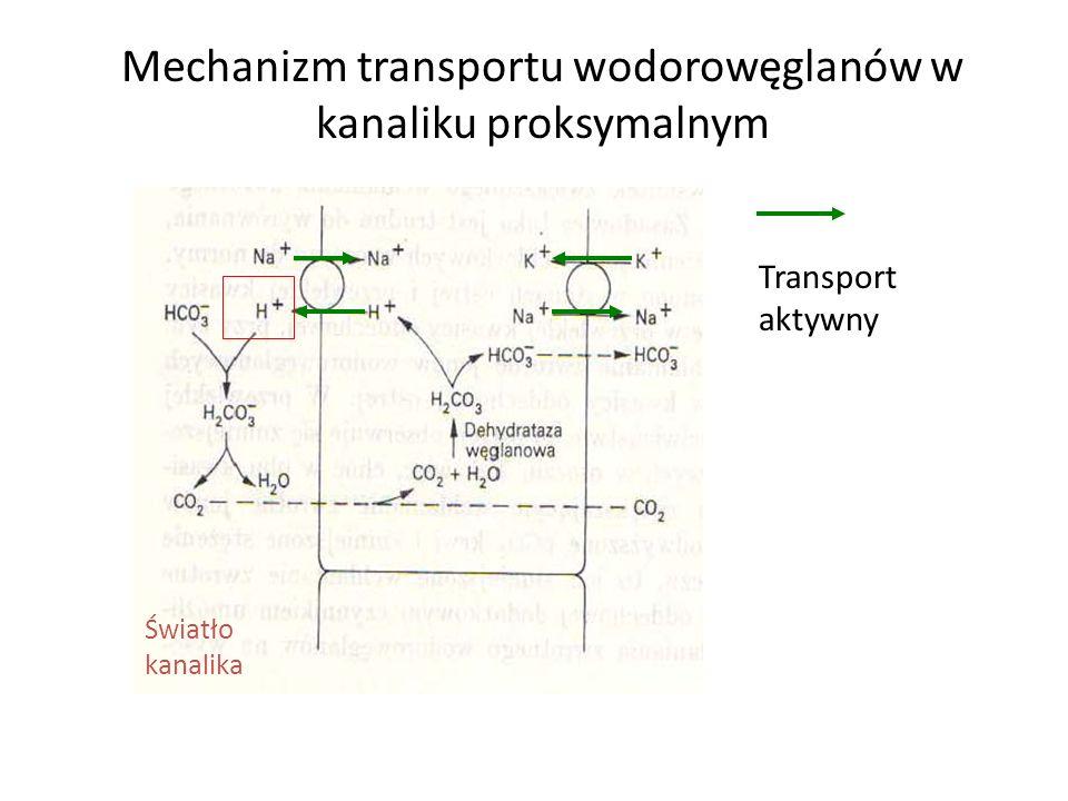 Mechanizm transportu wodorowęglanów w kanaliku proksymalnym