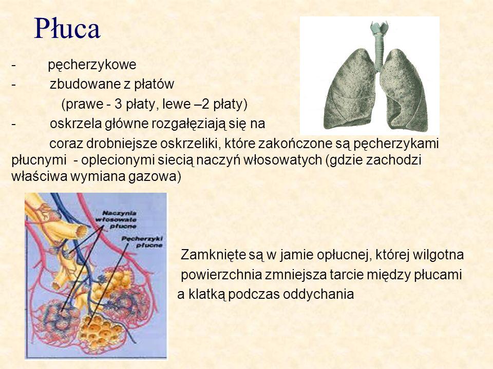 Płuca - pęcherzykowe - zbudowane z płatów