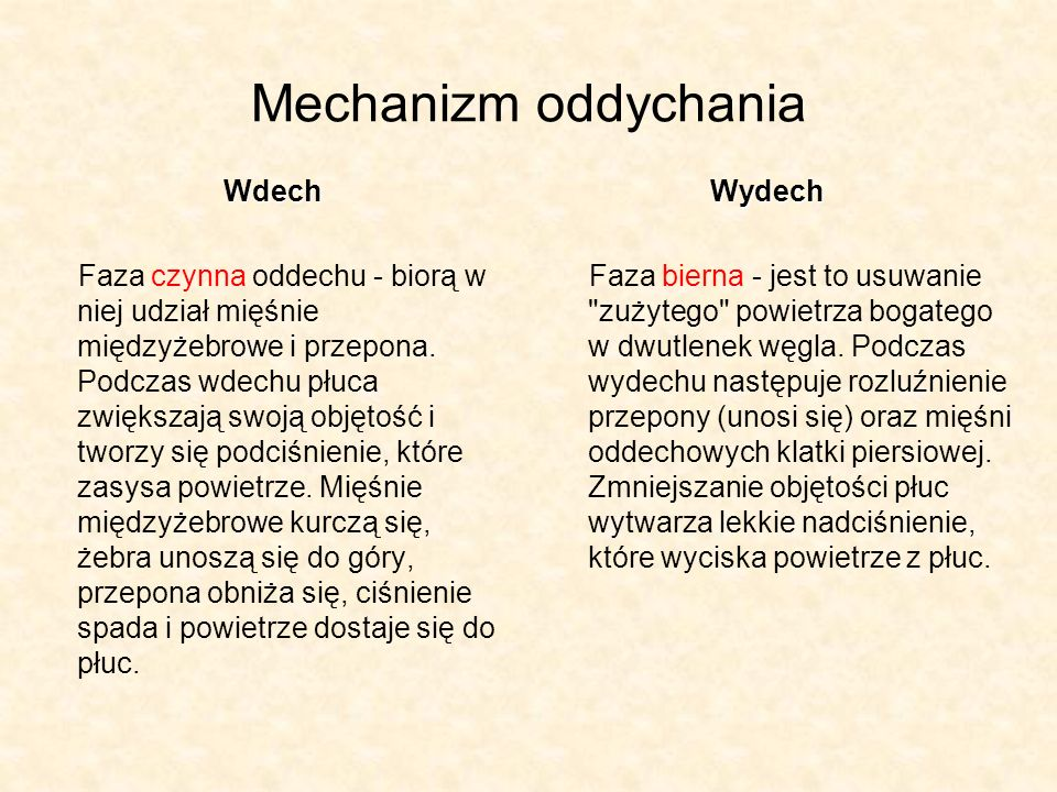 Mechanizm oddychania Wdech