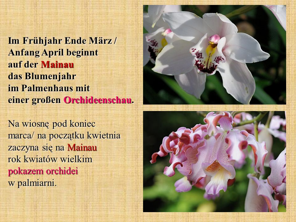 Im Frühjahr Ende März / Anfang April beginnt auf der Mainau das Blumenjahr im Palmenhaus mit einer großen Orchideenschau.