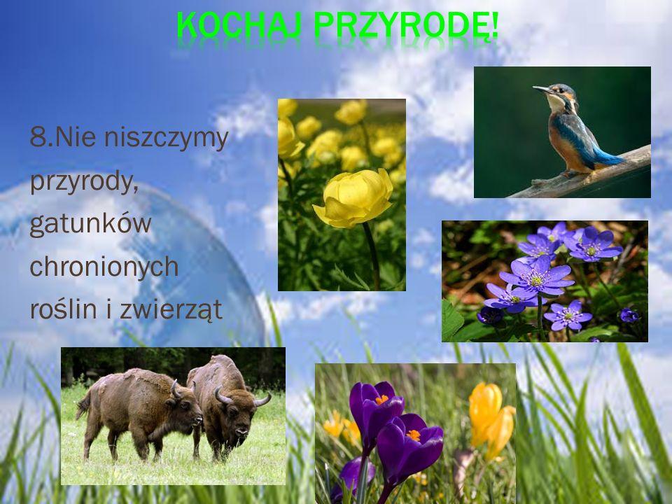 Kochaj przyrodę! 8.Nie niszczymy przyrody, gatunków chronionych roślin i zwierząt