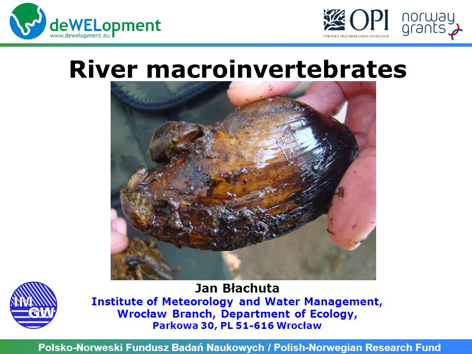 River macroinvertebrates