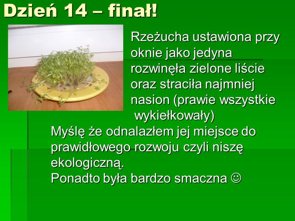 Dzień 14 – finał!