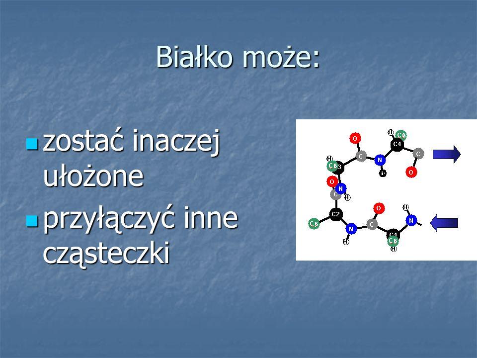 Białko może: zostać inaczej ułożone przyłączyć inne cząsteczki