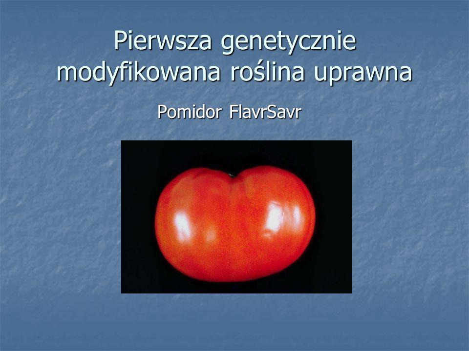 Pierwsza genetycznie modyfikowana roślina uprawna