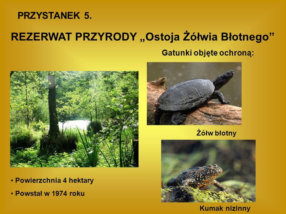 """REZERWAT PRZYRODY """"Ostoja Żółwia Błotnego"""