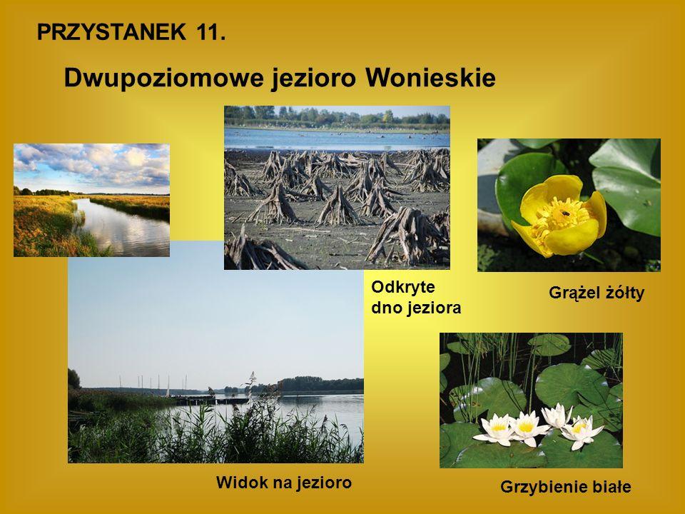 Dwupoziomowe jezioro Wonieskie