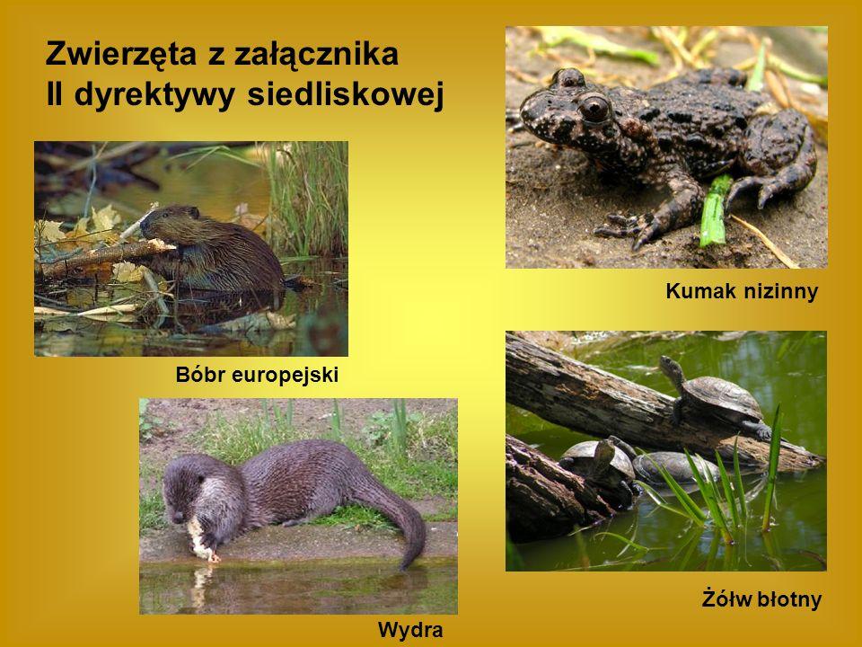 Zwierzęta z załącznika II dyrektywy siedliskowej
