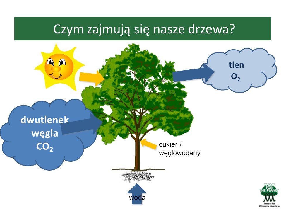 Czym zajmują się nasze drzewa