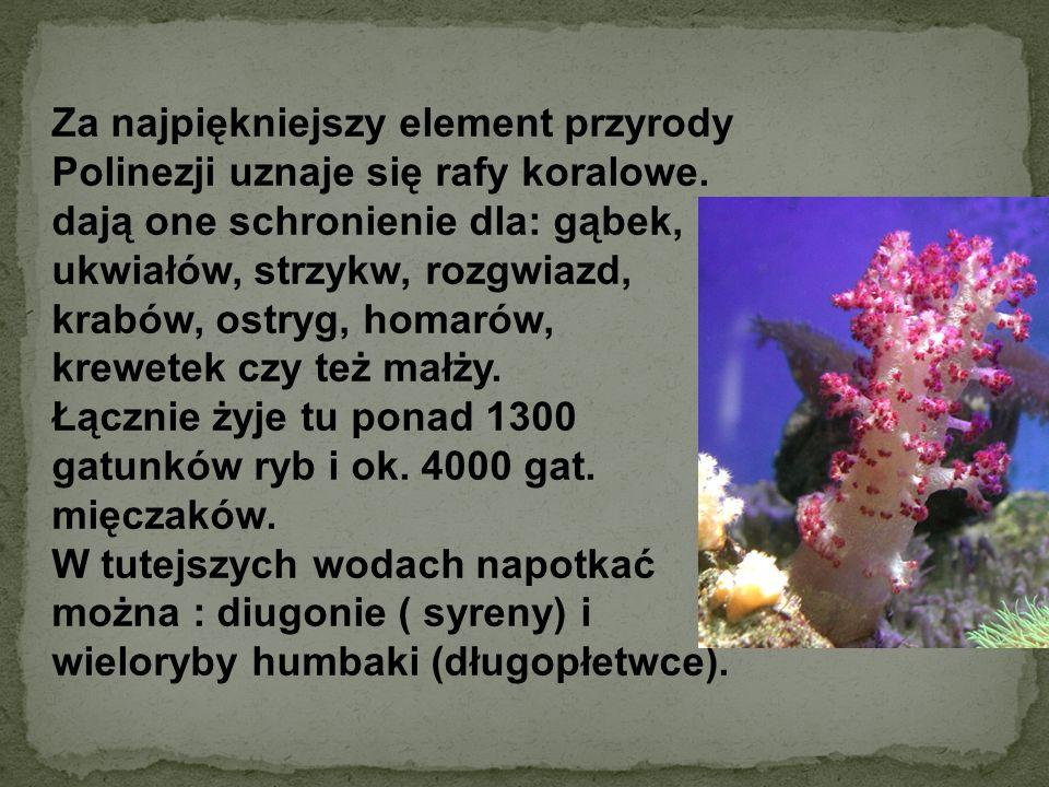 Za najpiękniejszy element przyrody Polinezji uznaje się rafy koralowe.