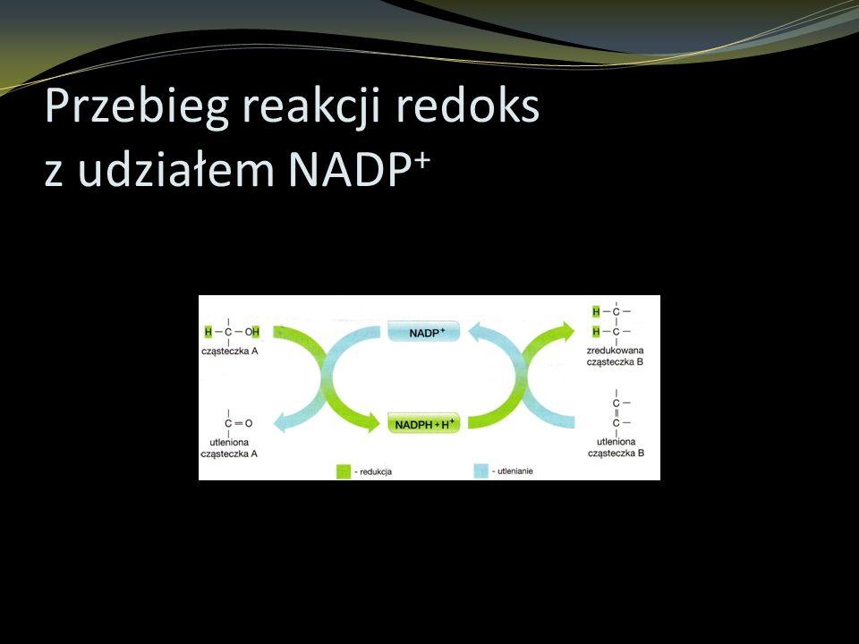 Przebieg reakcji redoks z udziałem NADP+