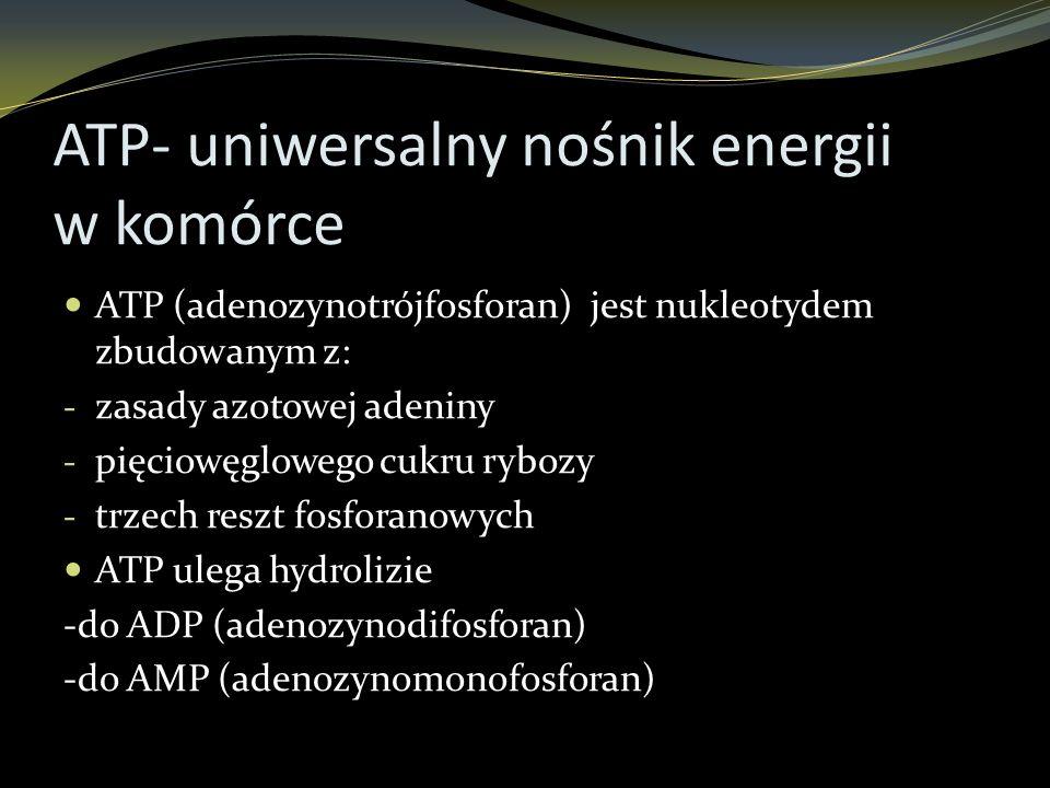 ATP- uniwersalny nośnik energii w komórce