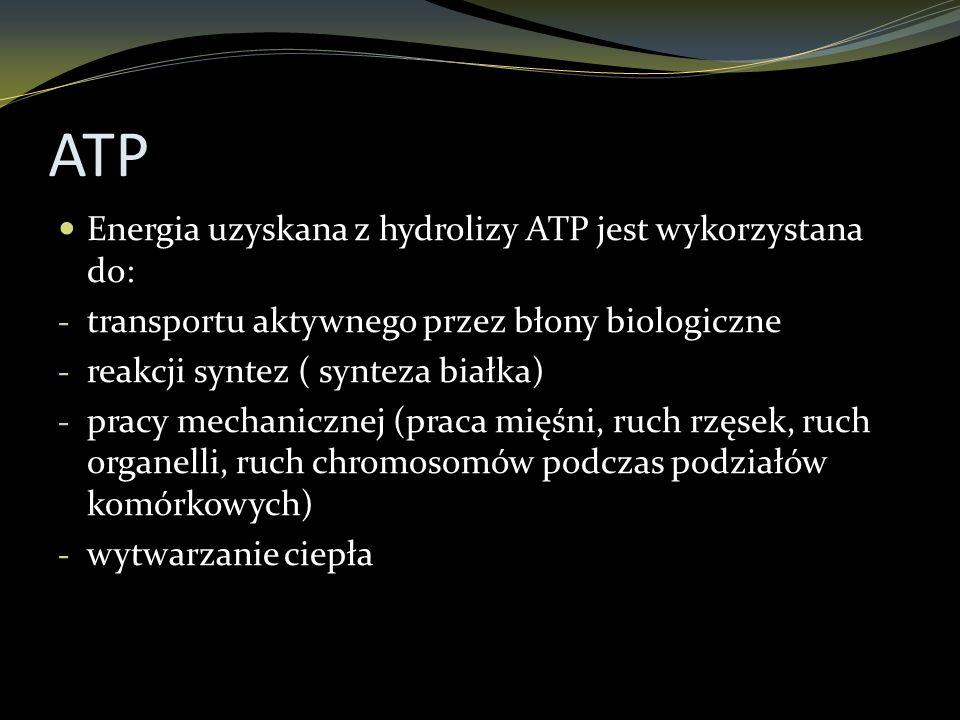 ATP Energia uzyskana z hydrolizy ATP jest wykorzystana do: