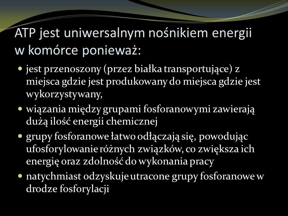 ATP jest uniwersalnym nośnikiem energii w komórce ponieważ: