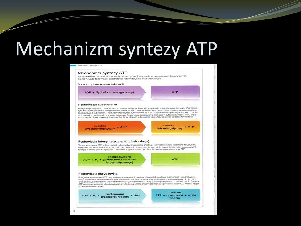Mechanizm syntezy ATP