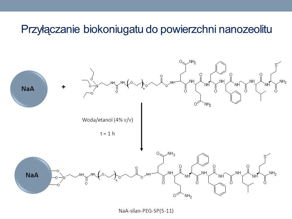 Przyłączanie biokoniugatu do powierzchni nanozeolitu