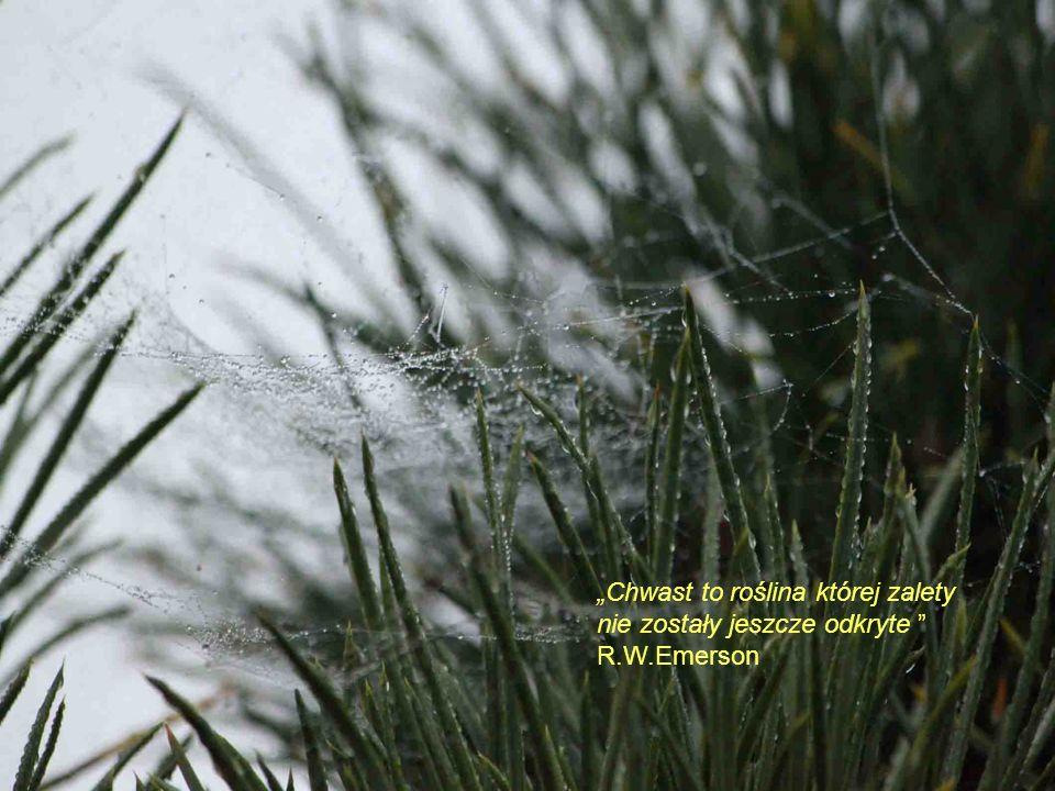 """""""Chwast to roślina której zalety nie zostały jeszcze odkryte"""