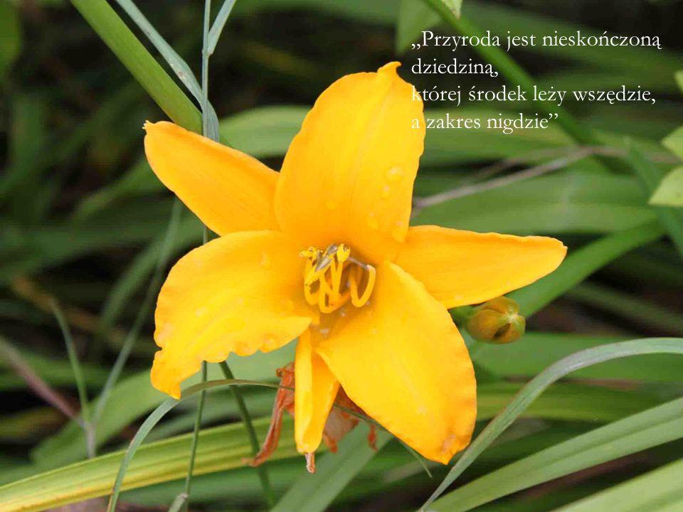 """""""Przyroda jest nieskończoną dziedziną, której środek leży wszędzie, a zakres nigdzie"""