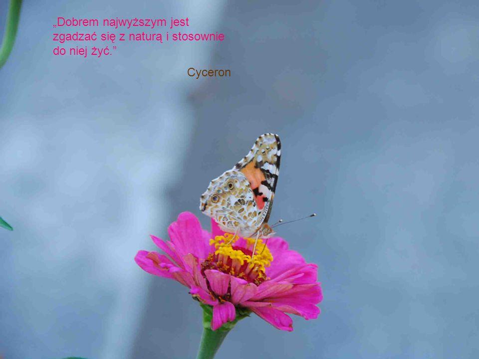 """""""Dobrem najwyższym jest zgadzać się z naturą i stosownie do niej żyć."""